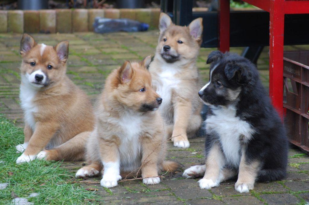 2009 pups